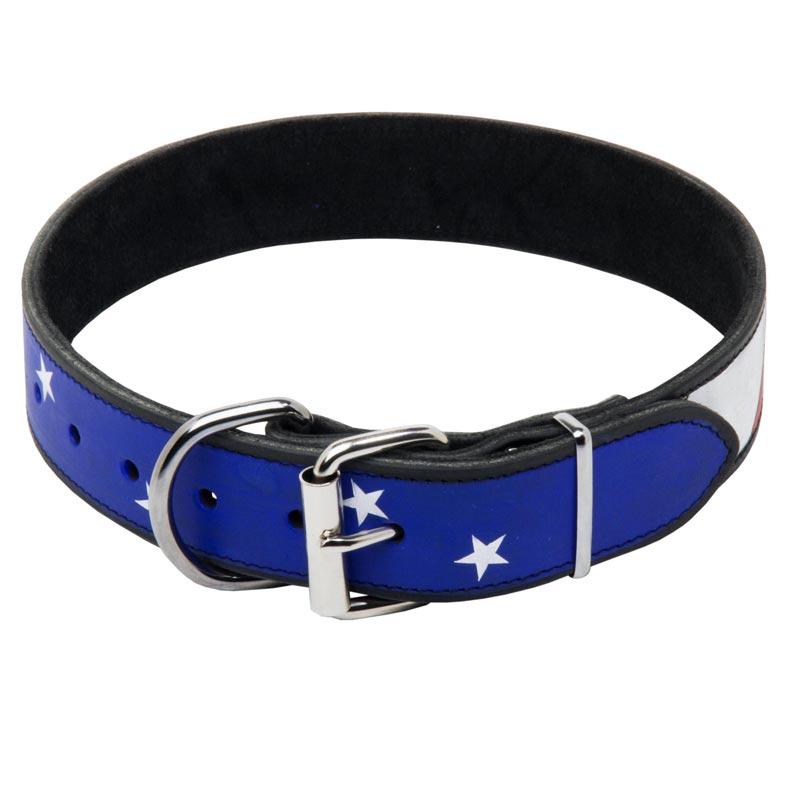 Custom   Dog Collar