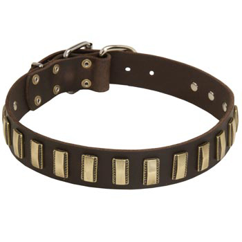 Leather Swiss Mountain Dog Collar Designer for Walking in Style