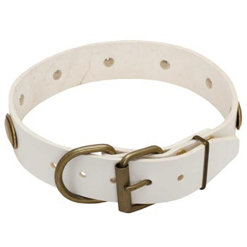 White Leather Dog Collar for Swiss Mountain Dog Stylish Walks