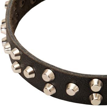 Leather Swiss Mountain Dog Collar Durable Stud Decorated