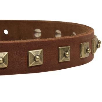Swiss Mountain Dog Leather Collar With Square  Studs