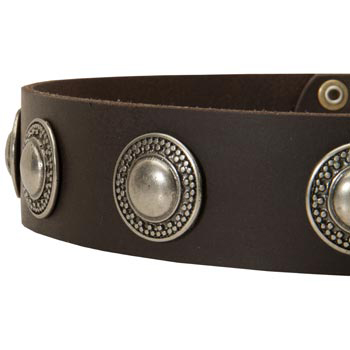 Leather Dog Collar with Conchos for   Swiss Mountain Dog