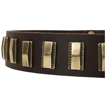 Leather Dog Collar with Adornment for Swiss Mountain Dog