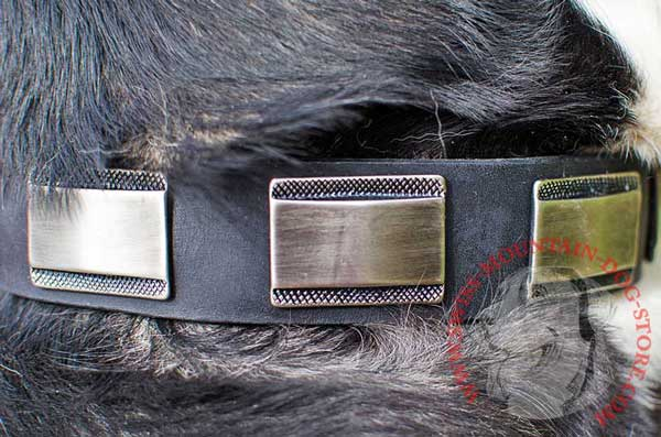 Massive Nickel Plates on Stylish Swiss Mountain Dog Collar