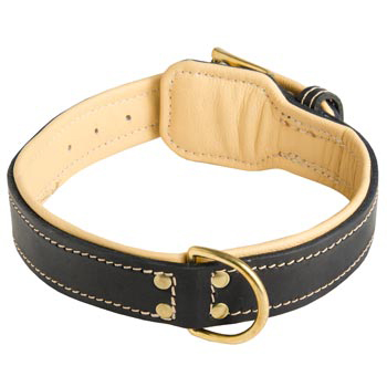 Leather Dog Collar Padded for Swiss Mountain Dog Off Leash Training