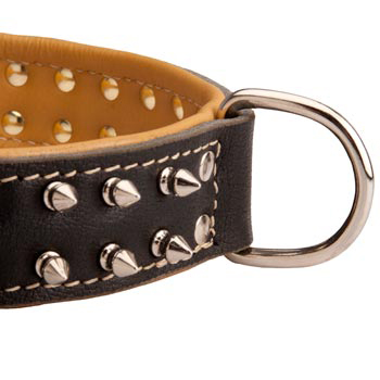 Padded Leather Swiss Mountain Dog Collar Spiked Adjustable for Training