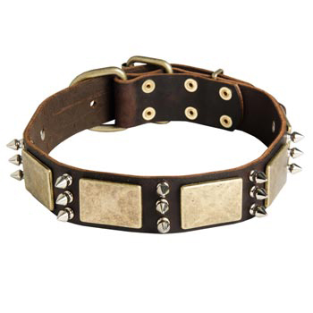 War-Style Leather Dog Collar for Swiss Mountain Dog