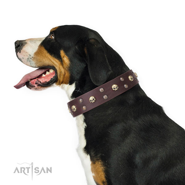 Comfortable wearing decorated dog collar of finest quality leather