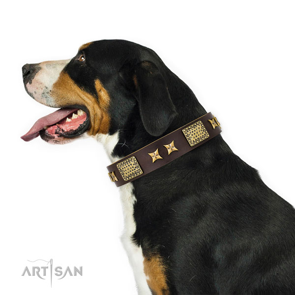 Everyday walking dog collar with designer adornments