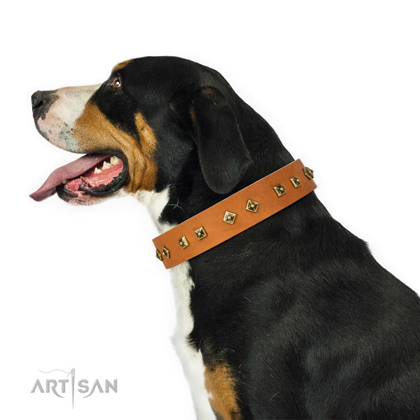Designer studs on fancy walking dog collar