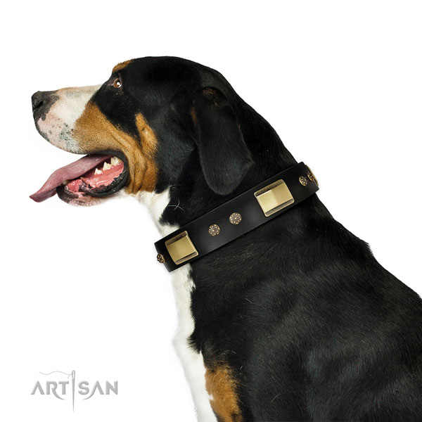 Daily use dog collar of genuine leather with stylish design studs