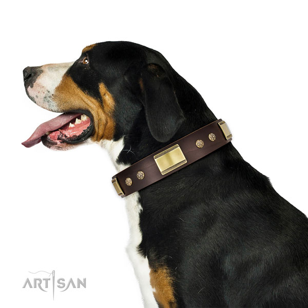 Daily use dog collar of leather with incredible studs