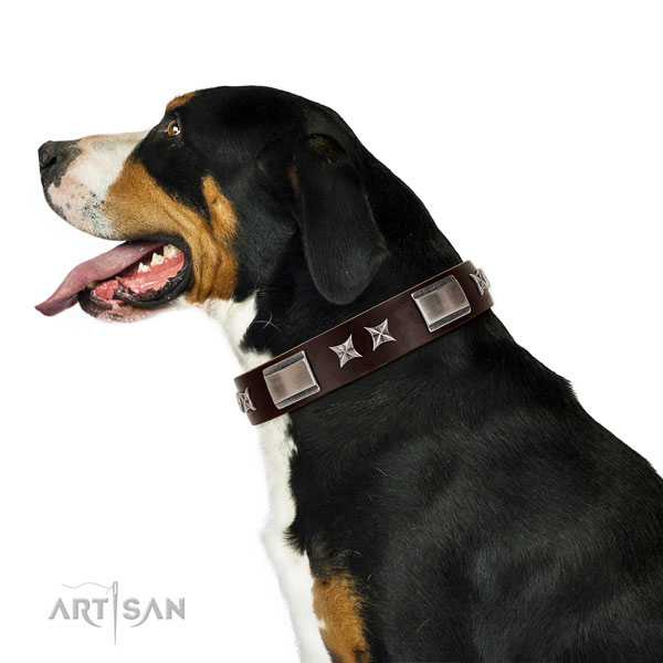Remarkable collar of leather for your beautiful four-legged friend
