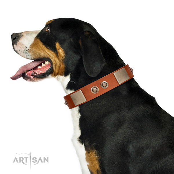 Corrosion proof fittings on leather dog collar for daily use