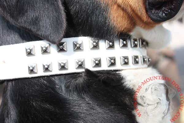 White Leather Swiss Mountain Dog Collar with 2 Rows of Studs