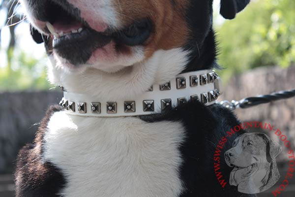 Leather Swiss Mountain Dog Collar with Old Nickel Studs