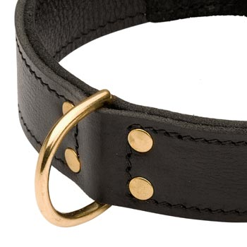 Brass D-ring Stitched to Leather Swiss Mountain Dog Collar