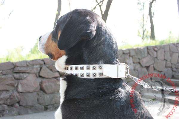Swiss Mountain Dog white leather collar with corrosion resistant fittings for professional use