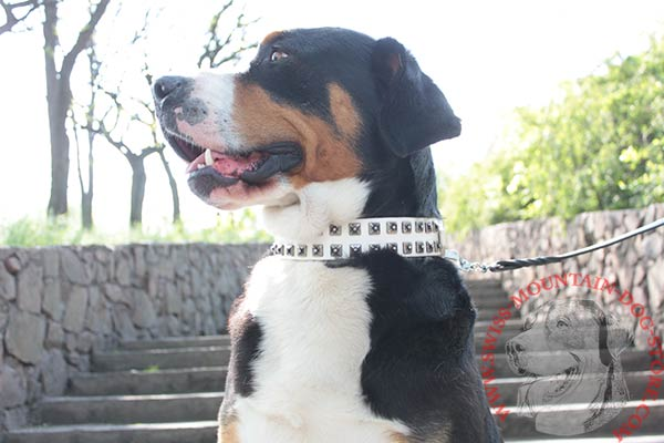Swiss Mountain Dog white leather collar with durable nickel plated hardware for quality control