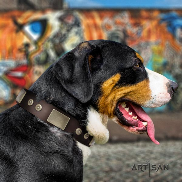 Swiss Mountain everyday use full grain leather collar with studs for your doggie