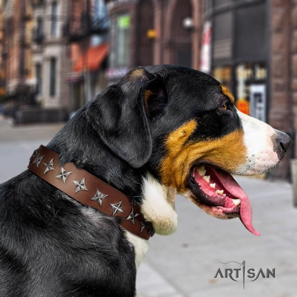 Swiss Mountain everyday use genuine leather collar with studs for your canine