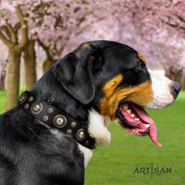 Swiss Mountain comfy wearing full grain leather collar with studs for your four-legged friend