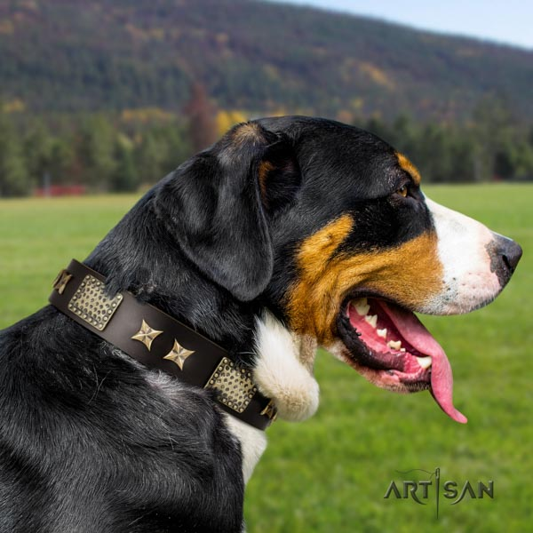 Swiss Mountain everyday use leather collar with studs for your canine