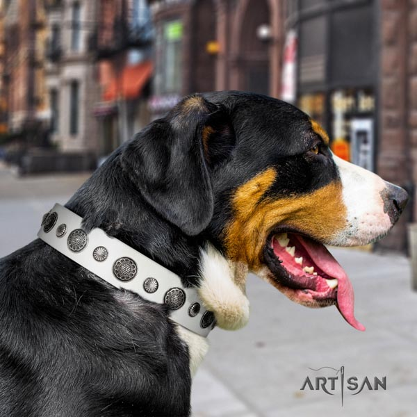 Swiss Mountain daily use full grain genuine leather collar with studs for your doggie