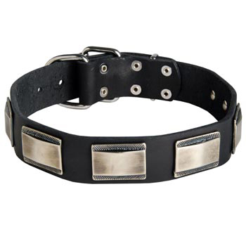 Leather Swiss Mountain Dog Collar with Solid Nickel Plates
