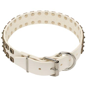 White Leather Dog Buckle Collar for Swiss Mountain Dog