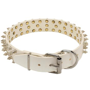 Spiked Leather Swiss Mountain Dog Collar