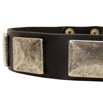 Wide Leather Swiss Mountain Dog Collar for Walking