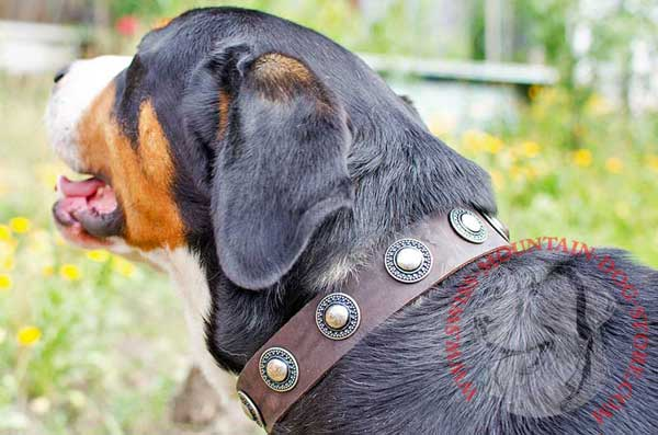 Amazing Handcrafted Dog Collar Leather Decorated for Swiss Mountain Dog