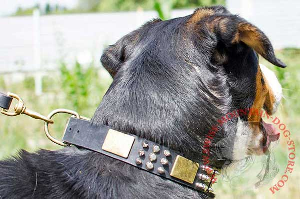 Leather Swiss Mountain Dog Collar with Mixed Decoration for Walking
