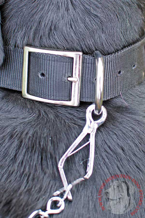 Strong Ring - Indispensable Element of This Collar's Hardware