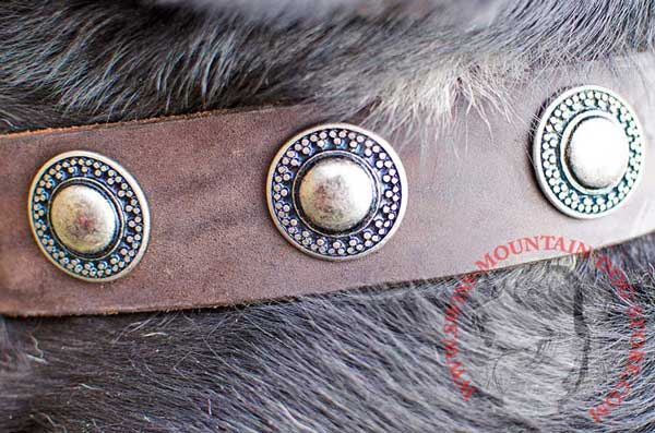 Outstanding Trendy Decoration - Gorgeous Conchos on Leather Dog Collar