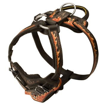 Leather Dog Harness with Handle for Swiss Mountain Dog Training