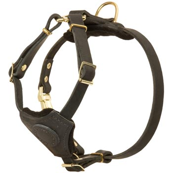 Light Weight Leather Puppy Harness for Swiss Mountain Dog