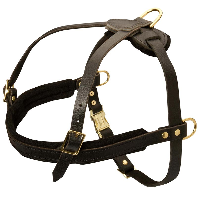 Big Leash Dog Training Collar