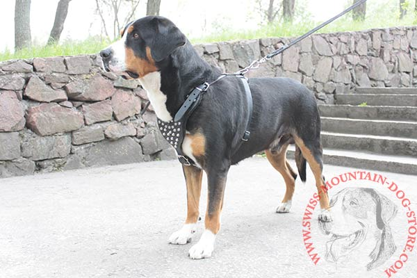 Decorated with Studs Swiss Mountain Dog Harness