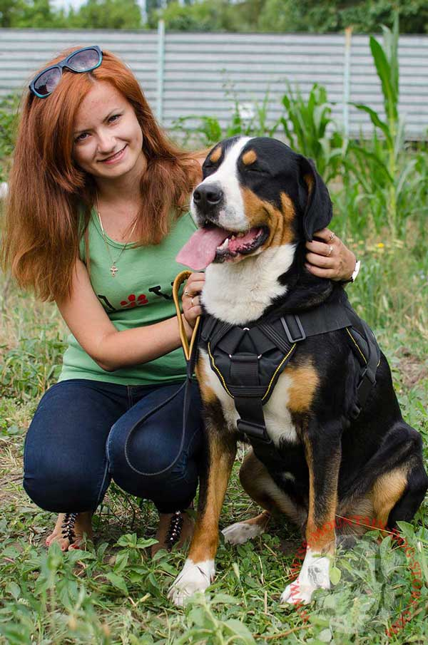 4 Ways Adjustable Nylon Harness for Swiss Mountain Dog