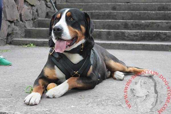 Durable Leather Swiss Mountain Dog Harness