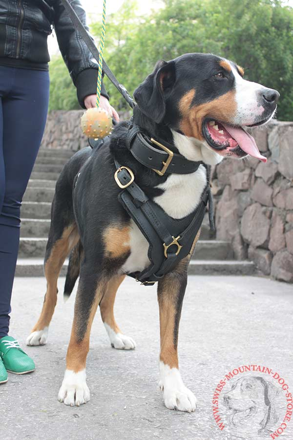 Leather Agitation Training Swiss Mountain Dog Harness