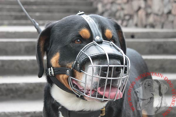 Ergonomic Wire Cage Swiss Mountain Dog Muzzle