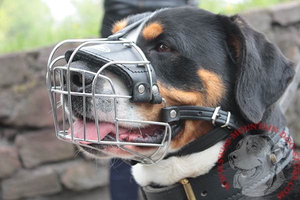 Wire Basket Swiss Mountain Dog Muzzle for Walking and Training