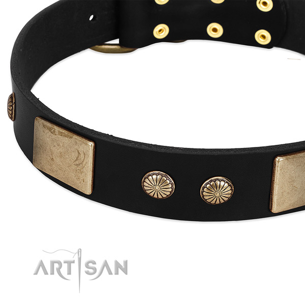 Full grain genuine leather dog collar with adornments for stylish walking