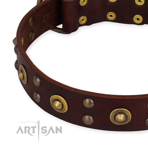 Leather collar with rust-proof fittings for your handsome four-legged friend