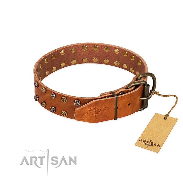 Stylish walking full grain leather dog collar with extraordinary embellishments