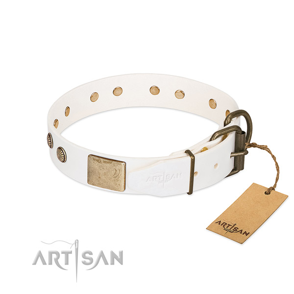 Rust resistant studs on everyday use dog collar