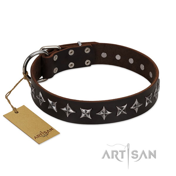 Everyday walking dog collar of high quality leather with decorations